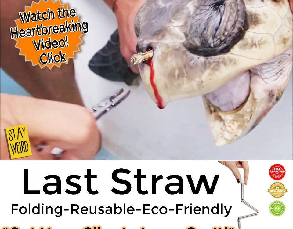 turtle with straw in its nose prompts folding reusable drinking straw